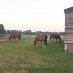Maasruiters Megen ponykamp 2017